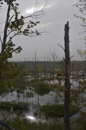 Port Elgin, Canadá: Early morning - birding along the Tower Trail
