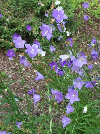 Avon, CO: Wildflowers !