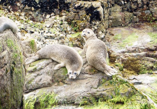 Lund, Canada: Baby seals on one of the islands