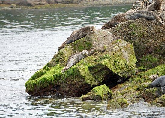 Lund, Canada: More baby seals