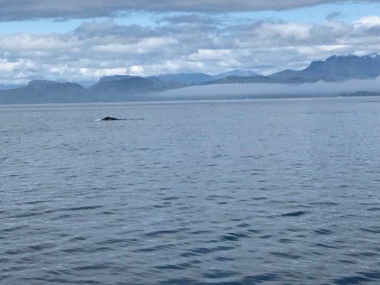 Telegraph Cove, Canada: photo0.jpg
