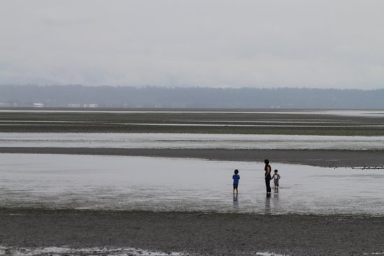 Tsawwassen, Canada: Nice stroll on the sea bed during low tide