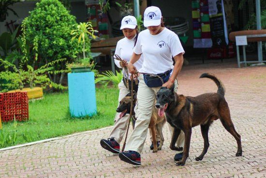 NPA Explosive Detection Dogs