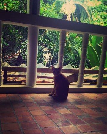 Tropica Resort and Restaurant: photo0.jpg