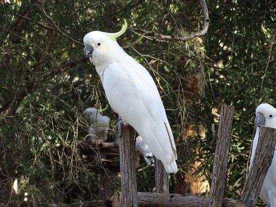 Merimbula, Australien: Potoroo Palace
