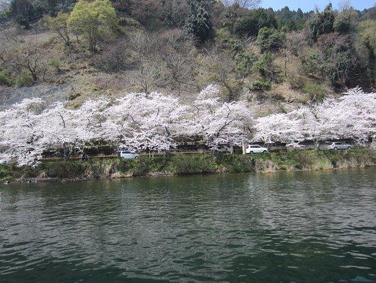 Kaizu Osaki: 小型船に乗って水上から鑑賞します