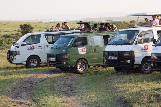 Group Safaris-Daily Departure to Masai Mara!