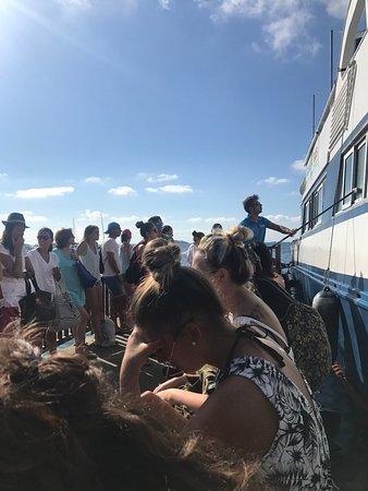 Aquabus Ferry Boats: photo0.jpg