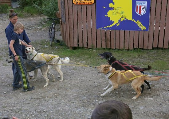 Kantishna Roadhouse: Dog sled demo