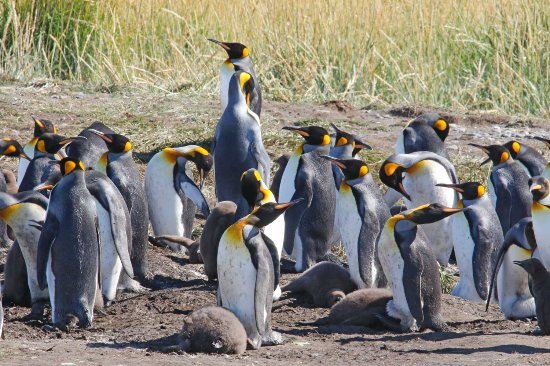 Foto de Tierra del Fuego