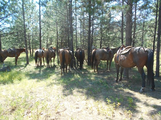 Cranbrook, Kanada: well earned rest for the horses