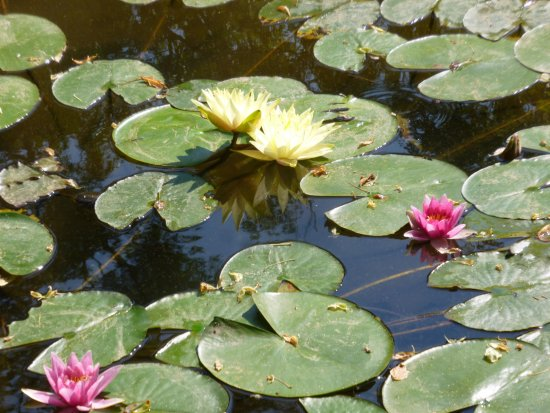 Parcours bild von jardin aquatique aux fleurs de l 39 eau for Jardin aux fleurs