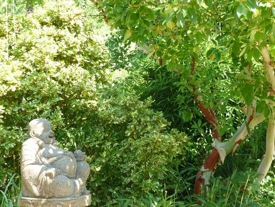 Jardin aquatique aux fleurs de l 39 eau jardin for Jardin aux fleurs