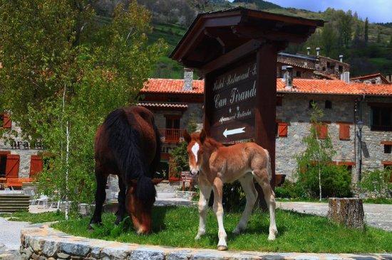 Can Tiranda: foto exterior del restaurante