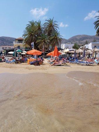 Yassas Beach Bar : Palmen