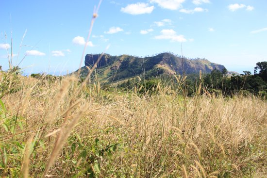 Koroyanitu National Heritage Park: The hike to the summit of Mt Batilamu