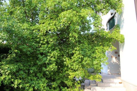 Giardino in Citta B&B: l'ingresso all'ombra di un grande acero
