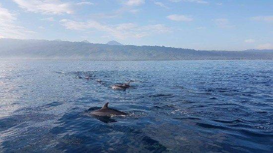 Lovina Beach, Indonesia: Beatiful Fish Lovina