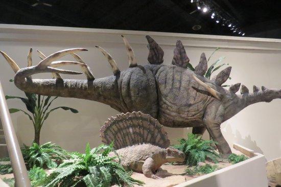 Dinosaur Display Picture Of Creation Museum Petersburg