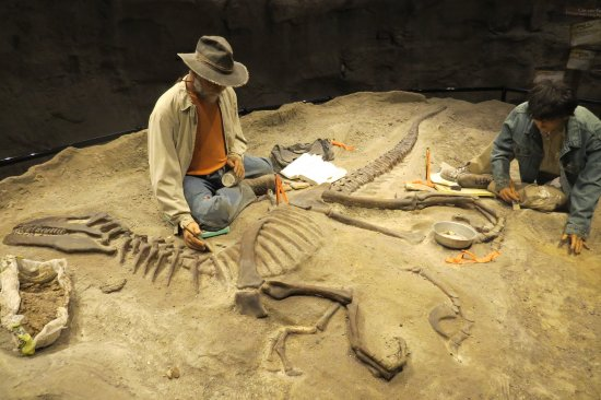 Simulated Fossil Dig Picture Of Creation Museum