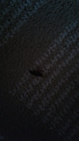 Dry Ridge, KY: Bug on floor in our room