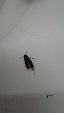 Dry Ridge, KY: Bug I took down to the desk