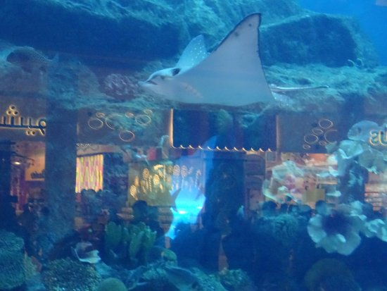 Dubai Aquarium   Picture of Dubai Aquarium  u0026 Underwater Zoo, Dubai   TripAdvisor