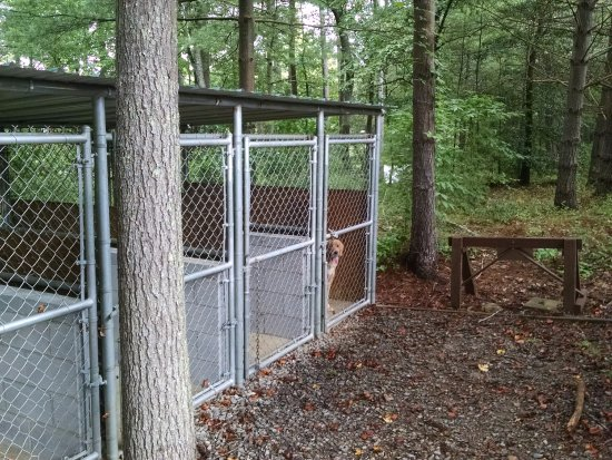 Dog Boarding Kennels In Asheville Nc