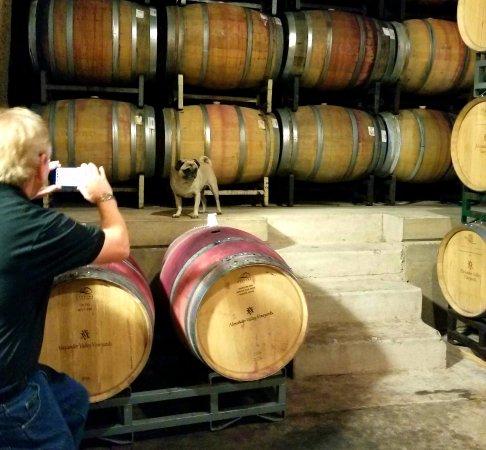Хилдсбург, Калифорния: @Alexander Valley Vineyards