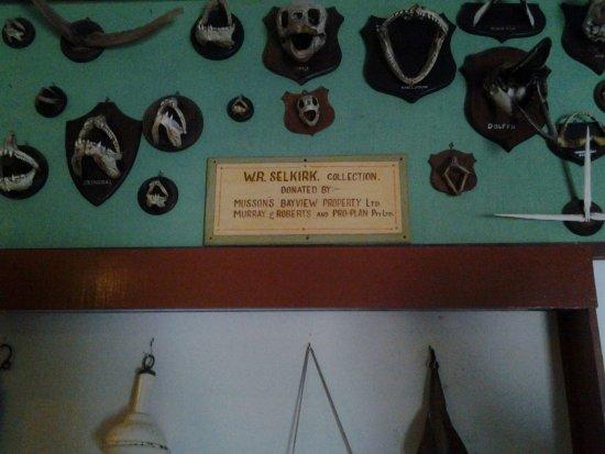 Hermanus, South Africa: Jaws!