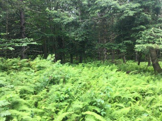 Jeffersonville, Вермонт: Wonderful early morning ride through an occasional light rain - wild turkeys and deer.   Led by