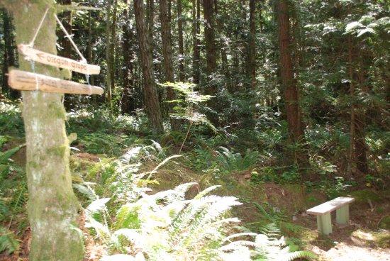 Halfmoon Bay, Canada: Walk our beautiful trails through the forest