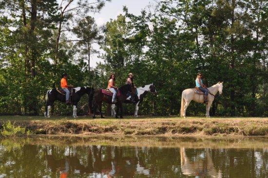 Grand Strand Horseback Riding