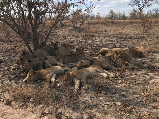 Singita Private Game Reserve, Νότια Αφρική: photo2.jpg