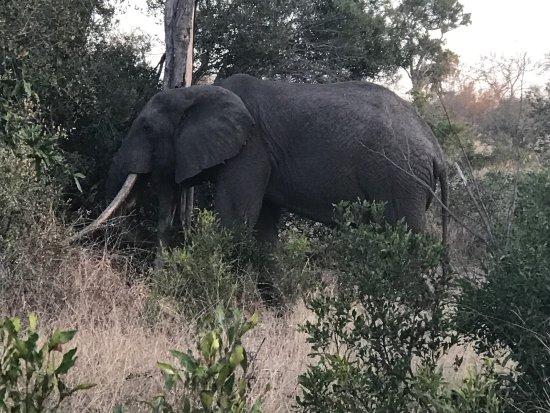 Singita Private Game Reserve, Νότια Αφρική: photo3.jpg