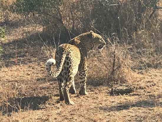 Singita Private Game Reserve, South Africa: photo6.jpg