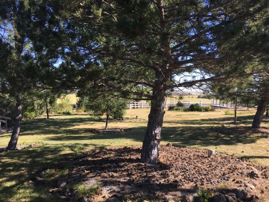 Grangeville, ID: Dog exercise area. Nice and shady with a little stream and a pond. Lots of room for your pets to