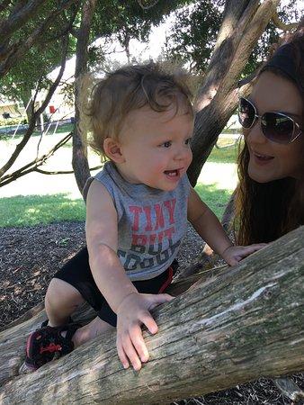Aurora, IL: Zayden climbing his first tree