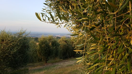 Rigone in Chianti : 20170719_202626_large.jpg