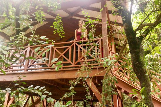 Hamanasi Adventure and Dive Resort: My Little Tree House