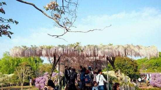 ashikaga flower park  top tips before you go