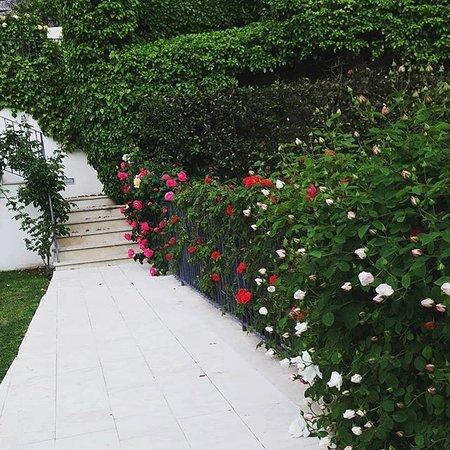 Villa del Lauro Photo