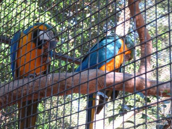 Blacktown, Australia: wild parrots