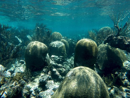 soliman bay coral reef picture of soliman bay tours tulum rh tripadvisor co za