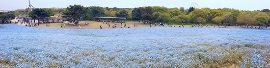 hitachi seaside park  hitachinaka  japan   top tips before you go