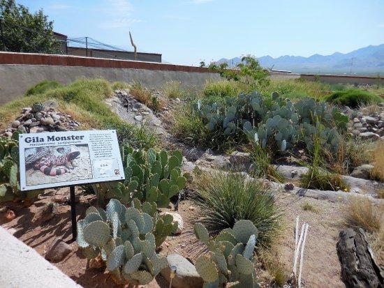 Rodeo, NM: Gila Monster habitat