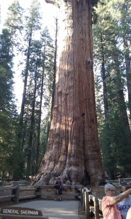 general sherman tree photo area sequoia and kings canyon national rh tripadvisor com