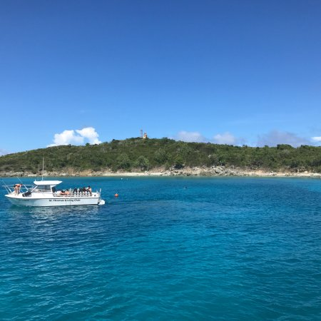 Swimming Cove Picture Of The Vi Cat St Thomas