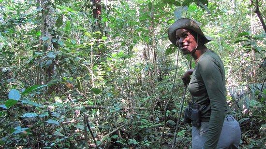 exploring the jungle picture of jaguar jungle survival manaus