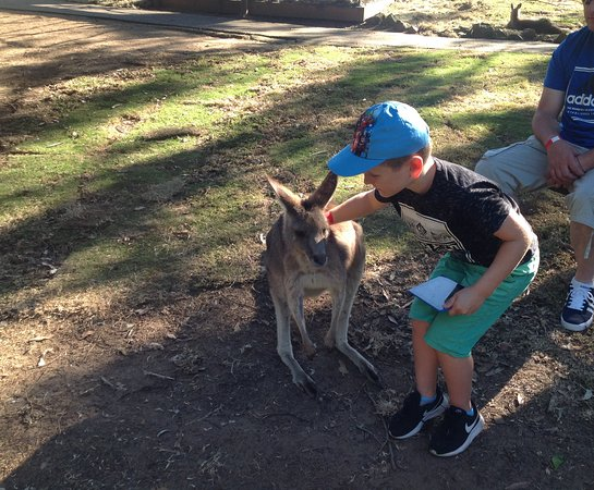 Woombye, Australia: The friendly Roos
